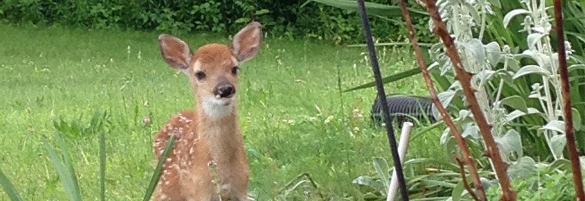 slide_deer